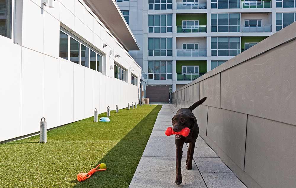 Pet Terrace Walking Area